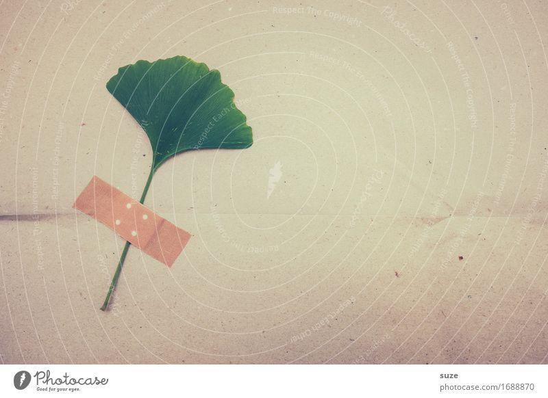 Heilpflanze Gesundheit Gesundheitswesen Alternativmedizin Medikament Pflanze Blatt Nutzpflanze einfach Krankheit grün Hilfsbereitschaft trösten Idee Kreativität