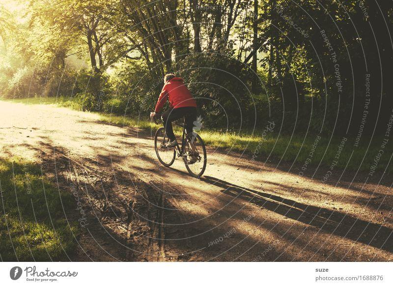 Geradeaus Lifestyle Freizeit & Hobby Ausflug Fahrradtour Sommer Fahrradfahren Mensch maskulin Junger Mann Jugendliche Erwachsene Umwelt Natur Landschaft Pflanze