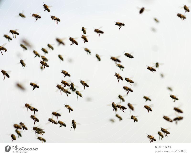 Mitten im Bienenschwarm... Himmel Natur Tier Umwelt Bewegung Luft Angst fliegen Tiergruppe Flügel Tiergesicht Schönes Wetter fantastisch Todesangst Wachsamkeit