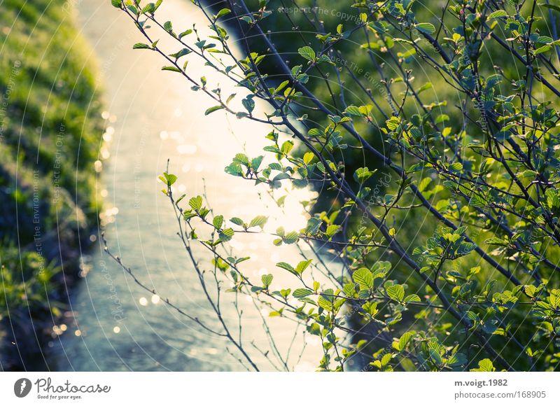 Flusslauf Natur Baum grün Pflanze Sommer Blatt Frühling Umwelt weich Ast natürlich Idylle Bach Flussufer sommerlich