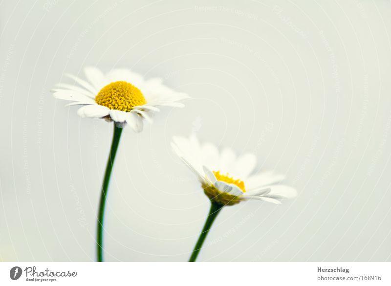 frisch. Natur grün Pflanze ruhig gelb Blüte Frühling elegant frei Horizont einfach einzigartig natürlich Idylle Neugier entdecken