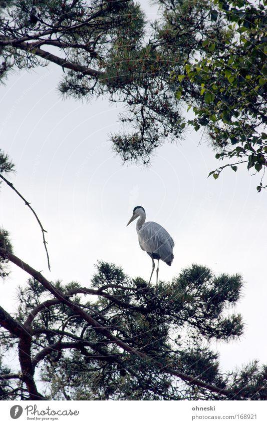 Fischreiher IV Himmel Natur Baum Tier ruhig Vogel fliegen Wildtier warten elegant stehen Vertrauen Asien Zoo Japan geduldig