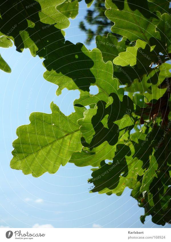 joseph. freiherr von eichendorff. Design Gesundheit Leben Gartenarbeit Umwelt Natur Pflanze Himmel Sonnenlicht Schönes Wetter Baum Blatt Eiche Eichenblatt