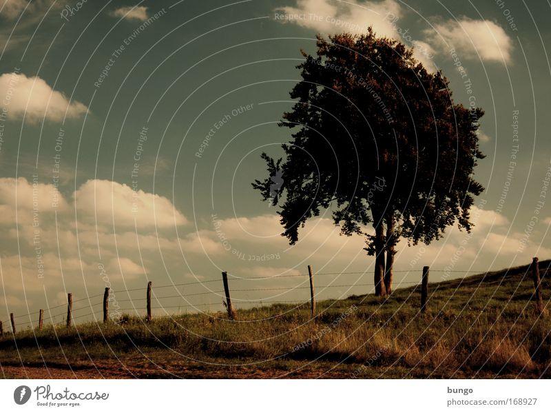 arbor fabulae Farbfoto Außenaufnahme Abend Dämmerung Silhouette Natur Landschaft Himmel Wolken Baum Wiese Hügel dunkel Umwelt Wachstum Wege & Pfade bungo Zaun