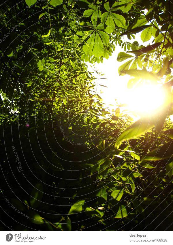 Märchenländle Natur Pflanze Sommer Wald Gefühle Frühling Landschaft Umwelt Sträucher Urelemente abstrakt Grünpflanze Sonnenstrahlen