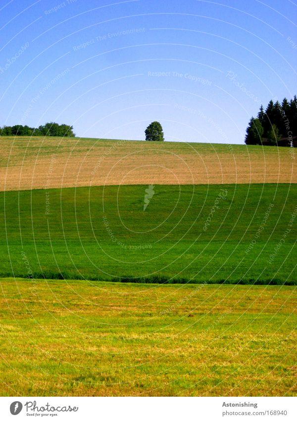 gestreift Umwelt Natur Landschaft Himmel Sommer Schönes Wetter Pflanze Baum Gras Wiese Feld Wald Hügel Wachstum blau braun mehrfarbig gelb grün Streifen