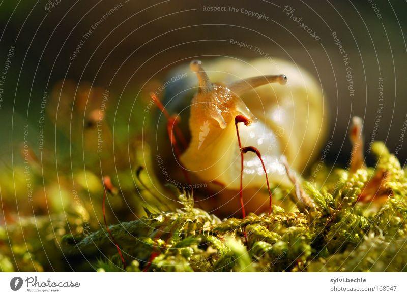 und dann kam polly Natur Pflanze Erde Schönes Wetter Moos Tier Schnecke Tiergesicht beobachten entdecken Blick klein braun gelb grün ruhig Schneckenhaus Hals