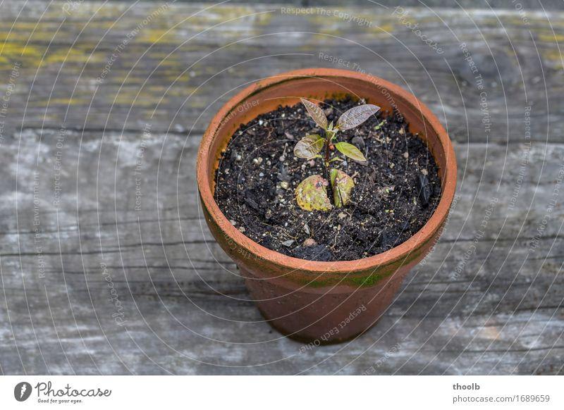 gedeihen natur pflanze ein lizenzfreies stock foto von. Black Bedroom Furniture Sets. Home Design Ideas