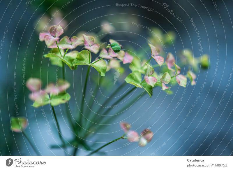 Am Wegesrand wandern Umwelt Natur Pflanze schlechtes Wetter Blatt Blüte Wildpflanze Feld Wald Blühend Duft verblüht dehydrieren Wachstum natürlich schön blau