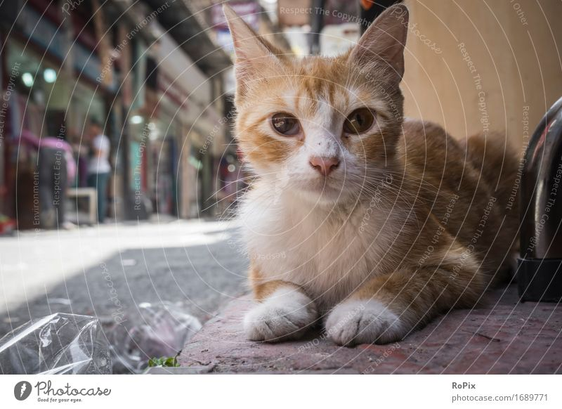 Istanbul streetcat Sightseeing Städtereise Umwelt Stadt Stadtzentrum Altstadt Fußgängerzone Haus Basar Verkehrswege Straße Wege & Pfade Tier Haustier Wildtier