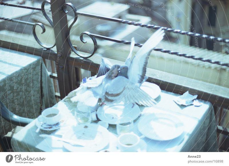 Turteltauben Liebe Verkehr Tisch Italien Taube Rom Umarmen