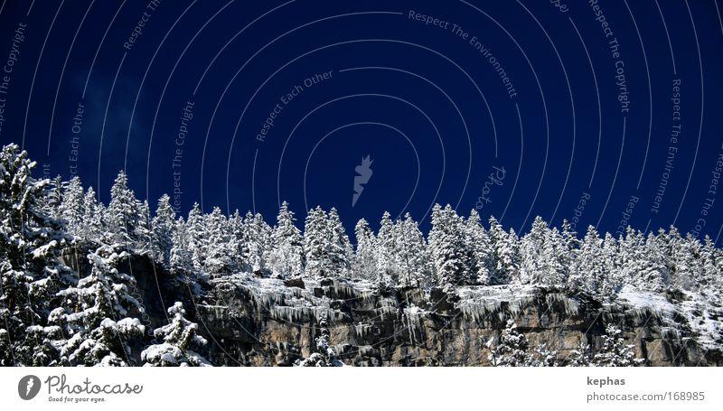 Zauberwald Farbfoto Außenaufnahme Menschenleer Textfreiraum oben Tag Landschaft Himmel Wolkenloser Himmel Winter Schönes Wetter Eis Frost Schnee Baum Wald