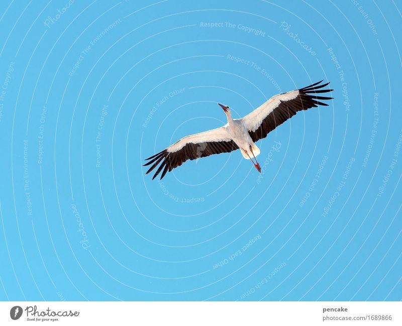 überwacht | geburtenkontrolle Natur Urelemente Himmel Wolkenloser Himmel Schönes Wetter Tier Wildtier Vogel 1 Zeichen beobachten fliegen Storch Geburt Kontrolle