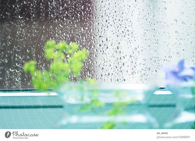 Sommerregen harmonisch ruhig Natur Wasser Wassertropfen Frühling Wetter Regen Blume Fenster Dekoration & Verzierung Vase Glas Tropfen glänzend warten ästhetisch