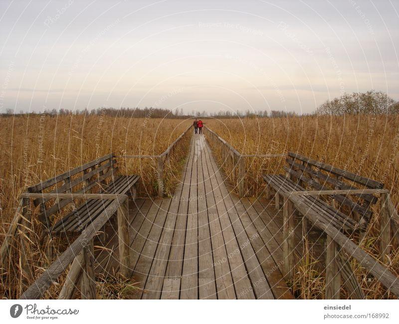 ...und an der nächsten ecke links Natur Ferien & Urlaub & Reisen ruhig gelb Ferne Erholung Herbst Freiheit Wärme Landschaft Zufriedenheit braun Feld wandern gold frei