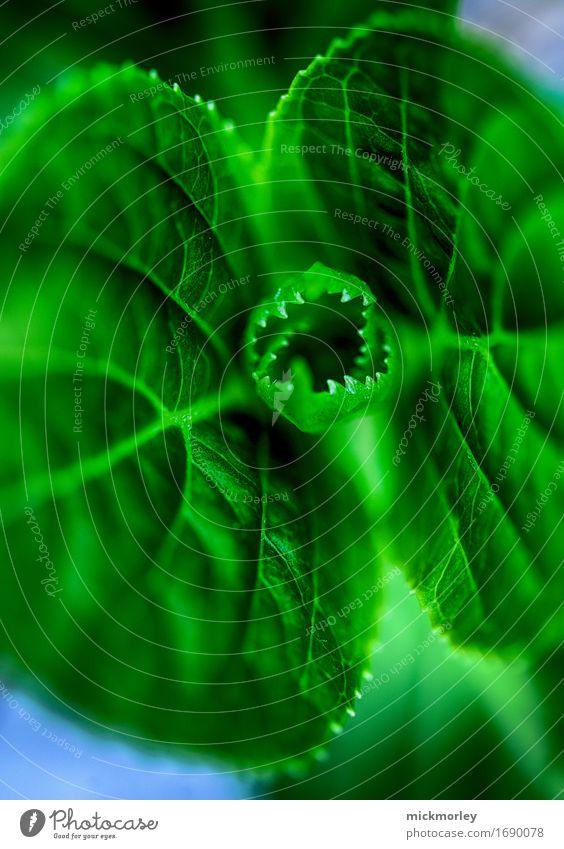 Grüner Drache Umwelt Pflanze Blatt Wildpflanze exotisch Garten Wiese Wald Urwald Blühend Wachstum außergewöhnlich bedrohlich gruselig wild grün Kraft Angst