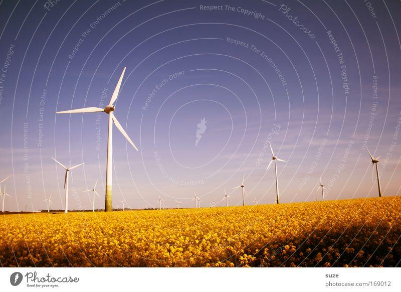 Sommerwind Wiese Landschaft Feld Umwelt Industrie modern Energiewirtschaft Zukunft Wandel & Veränderung Klima Windkraftanlage Wirtschaft Handel Umweltschutz Umweltverschmutzung Rapsfeld