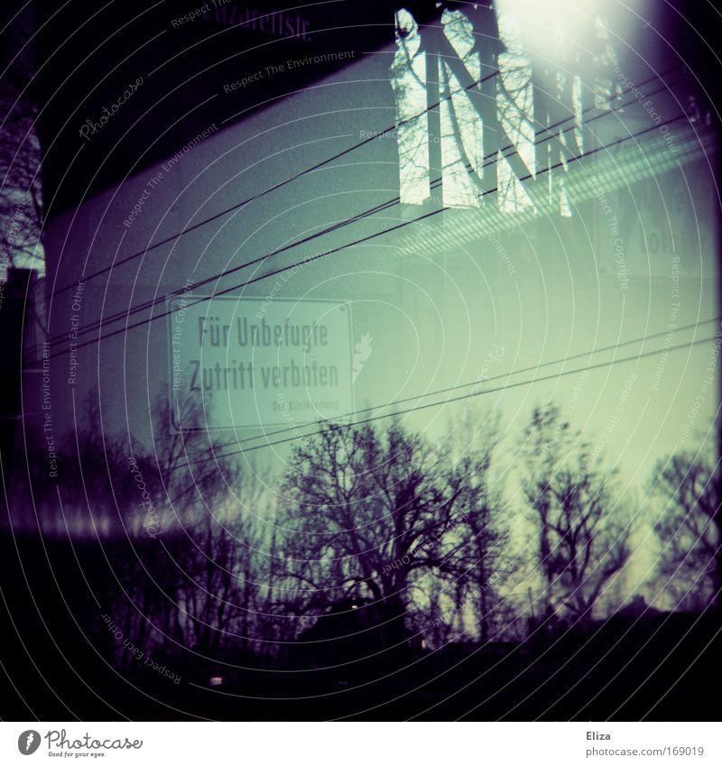 Bitte das Kleingedruckte lesen Himmel Wald dunkel Fenster Schilder & Markierungen Vergänglichkeit Hinweisschild Elektrizität Holga Verbote Leitung unheimlich Hochspannungsleitung Lichteinfall Warnschild Zutritt verboten