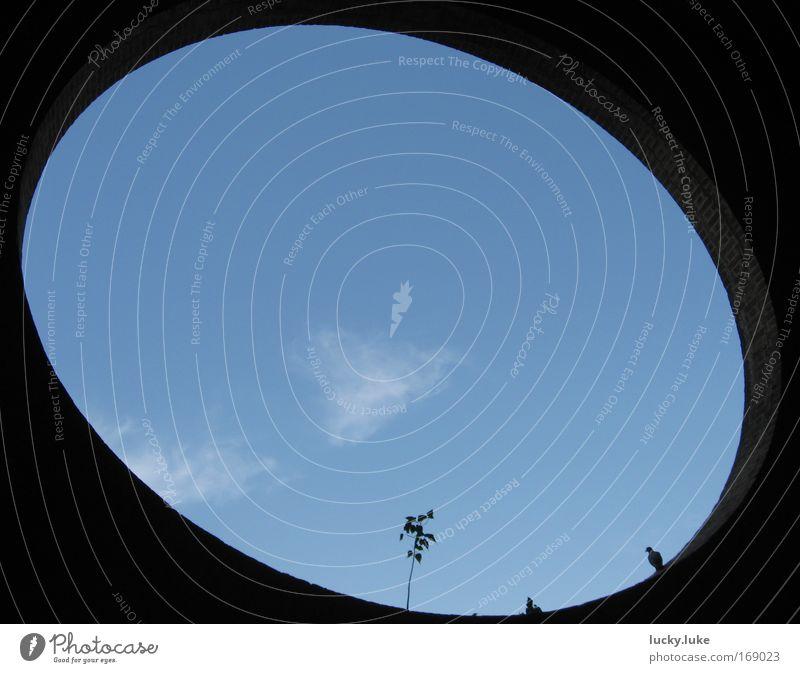Himmelsausschnitt Farbfoto Außenaufnahme abstrakt Menschenleer Textfreiraum links Textfreiraum rechts Textfreiraum oben Textfreiraum unten Textfreiraum Mitte