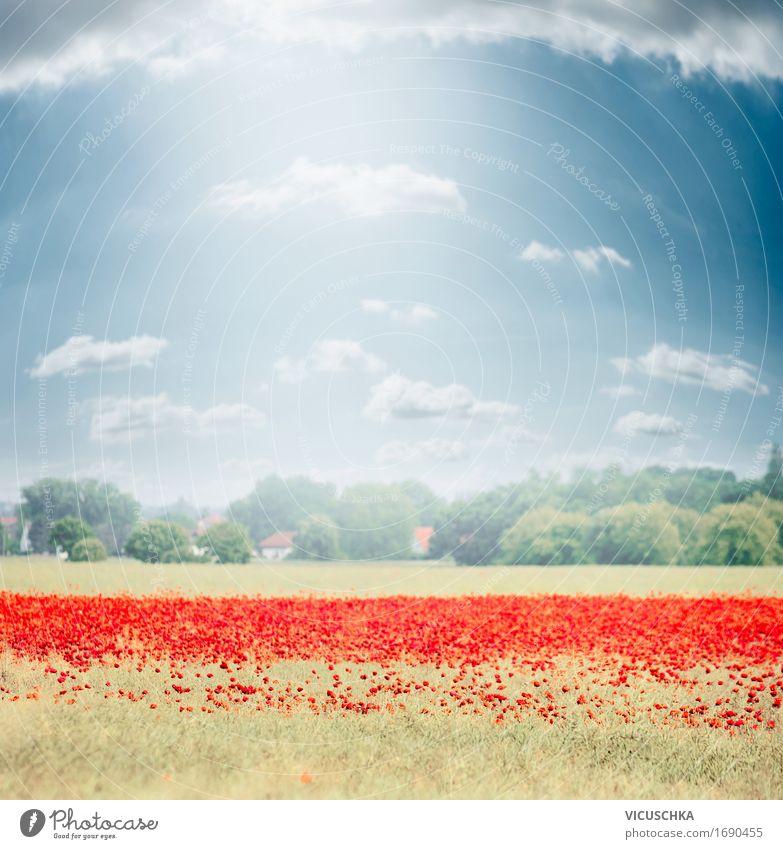 Landschaft mit Mohnblumen Feld Design Sommer Natur Pflanze Himmel Sonnenlicht Schönes Wetter Blume Wiese Blühend Hintergrundbild Deutschland Mohnfeld Dorf