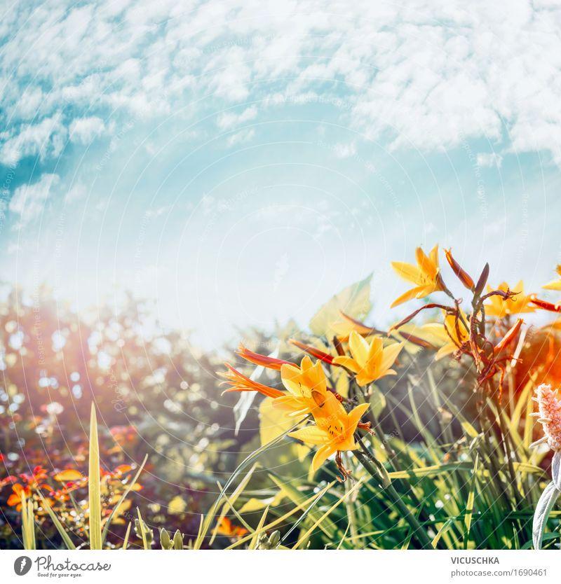 Gelbe Blumen im Garten oder Park am Himmel Hintergrund Natur Pflanze Sommer Landschaft Blatt gelb Blüte Herbst Gras Lifestyle Stimmung Design