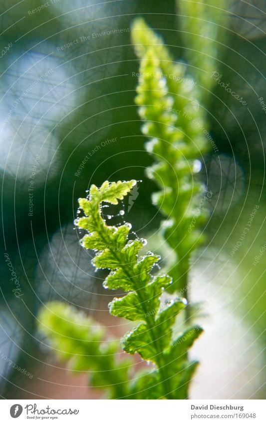Great mother nature Natur grün schön Sommer Pflanze Blatt Umwelt Frühling authentisch Farn Grünpflanze gekrümmt Blattgrün Photosynthese