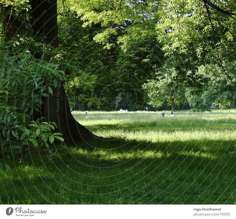 Baum grün Wiese Park