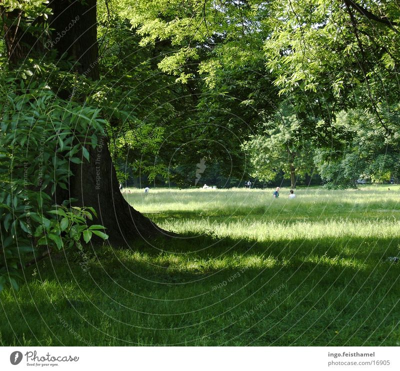 Baum Wiese grün Park