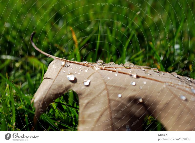 Morgentau Außenaufnahme Detailaufnahme Menschenleer Natur Herbst Regen Gewitter Gras Garten Park nass Vergänglichkeit Blatt Wassertropfen tropfend Spaziergang