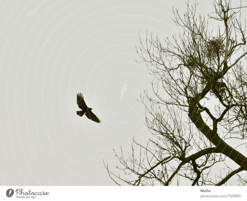 Poem Natur Himmel Baum Pflanze Winter ruhig Einsamkeit Tier dunkel Herbst Freiheit grau Traurigkeit Vogel Umwelt fliegen