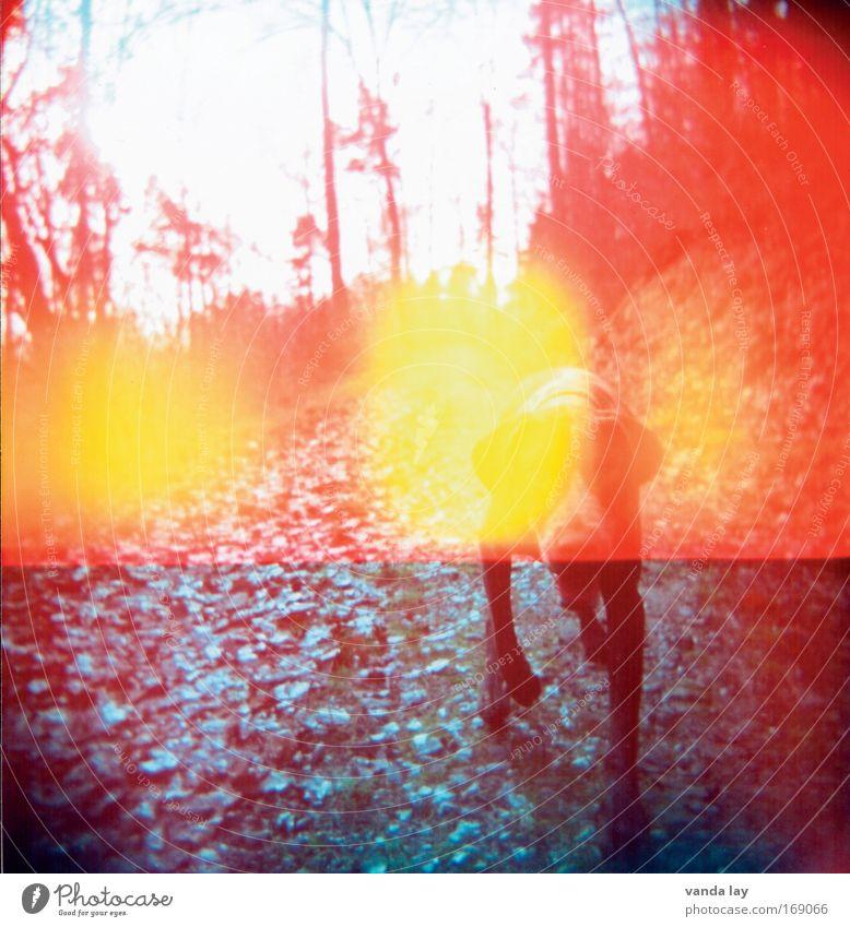 schlecht abgedichtet Farbfoto mehrfarbig Außenaufnahme Experiment Lomografie Holga Menschenleer Textfreiraum unten Lichterscheinung Sonnenlicht Tierporträt