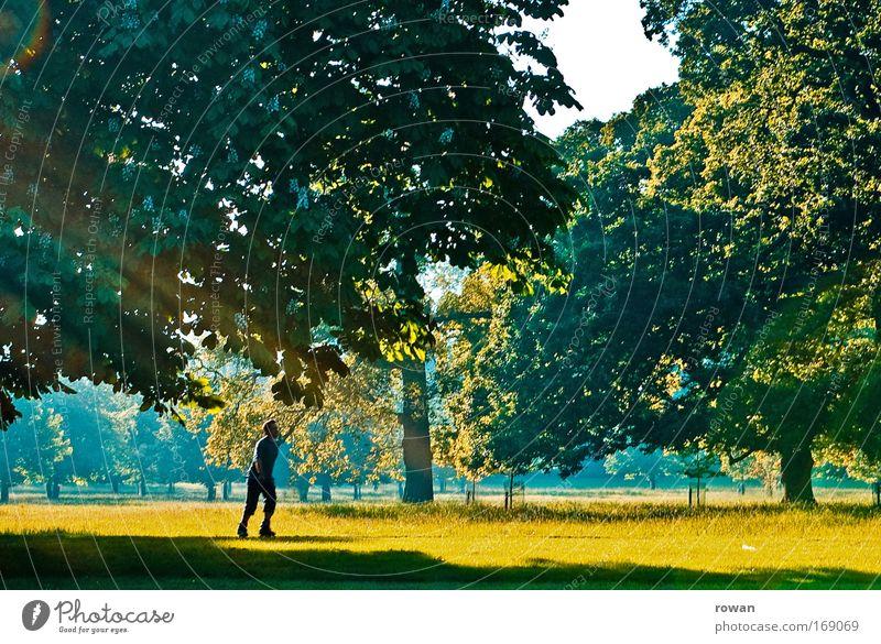 entstressen Mensch Mann Natur grün Baum Sonne Sommer Freude ruhig Erwachsene gelb Erholung Landschaft Leben Wärme Gras