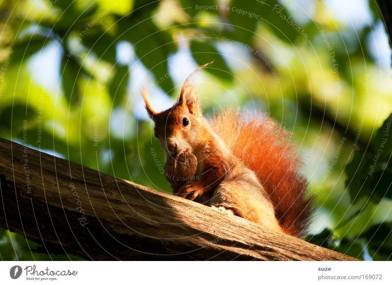 Futterneid Natur Pflanze Sonne Baum rot Landschaft Blatt Tier Umwelt Wildtier niedlich Ast Neugier Fell Vertrauen Appetit & Hunger