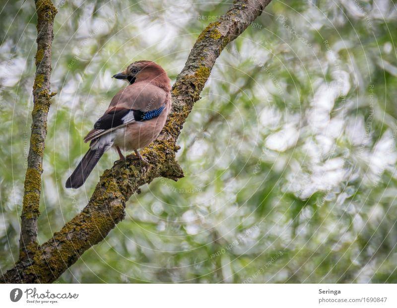 In die andere Richtung schauen u. abwarten was passiert Umwelt Natur Landschaft Pflanze Baum Garten Park Wald Tier Wildtier Vogel Tiergesicht Flügel Krallen