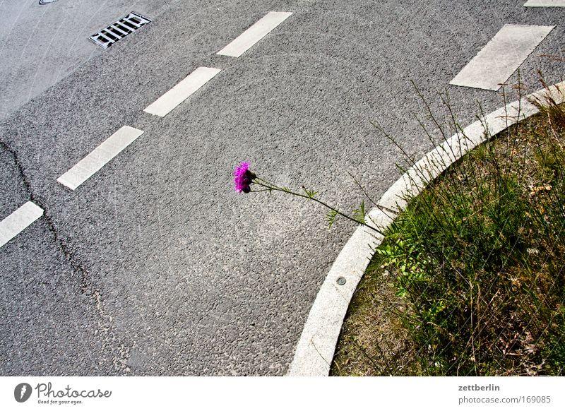 Blume und Strasse/slight return Pflanze Sommer Straße Blüte Traurigkeit Straßenverkehr Verkehr Wachstum Vergänglichkeit Hinweisschild Verzweiflung Verkehrswege