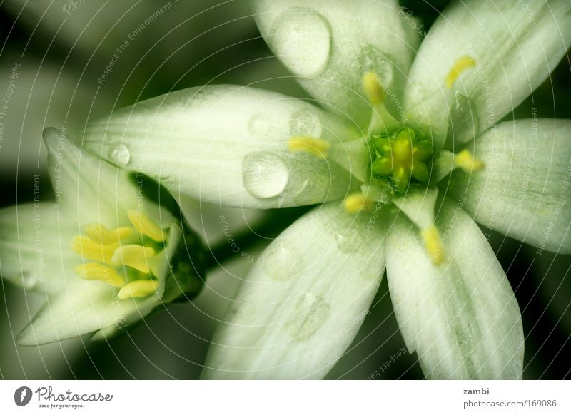 im garten Natur schön weiß grün Tier Blüte Frühling träumen Park Regen Zufriedenheit nass Ausflug frisch neu