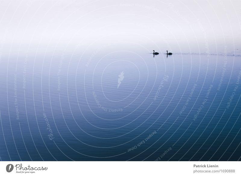 Friends Natur Ferien & Urlaub & Reisen blau schön Wasser Landschaft Tier Umwelt Leben natürlich Küste Erde See Zusammensein Freundschaft Wetter