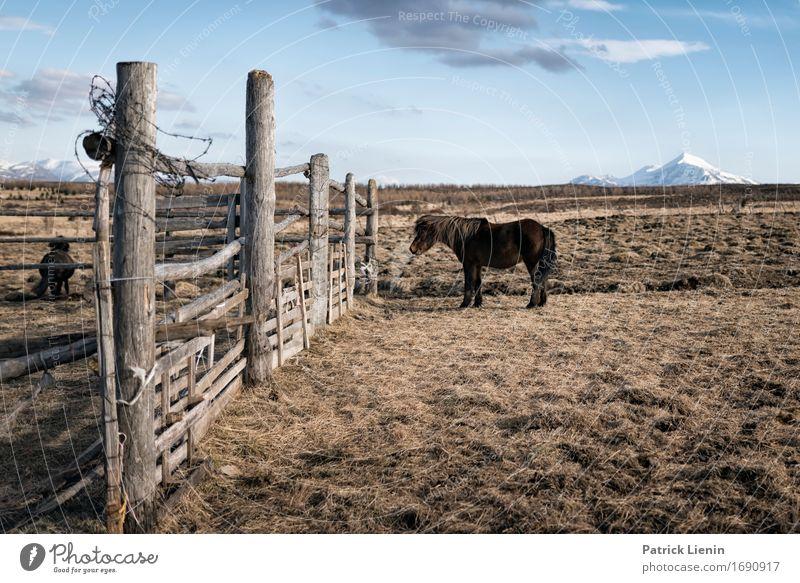 Einsames Island Natur Ferien & Urlaub & Reisen Landschaft Erholung Tier Berge u. Gebirge Umwelt Leben Wiese Erde Horizont Wetter Feld elegant Insel einzigartig