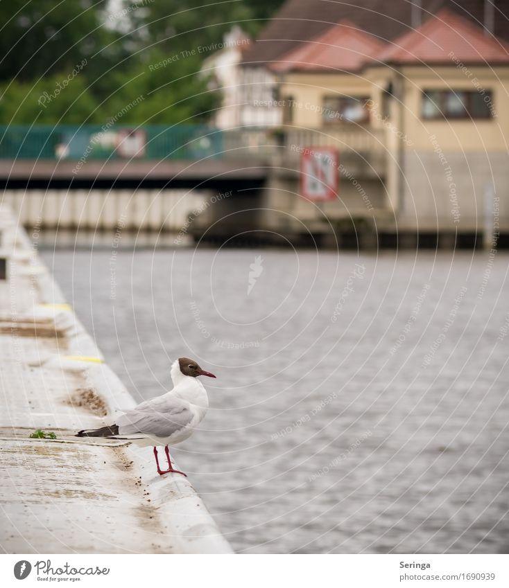 Warten auf das nächste Schiff Küste Seeufer Flussufer Bach Tier Wildtier Vogel Tiergesicht Flügel Krallen 1 fliegen Möwenvögel Möwendreck Farbfoto mehrfarbig