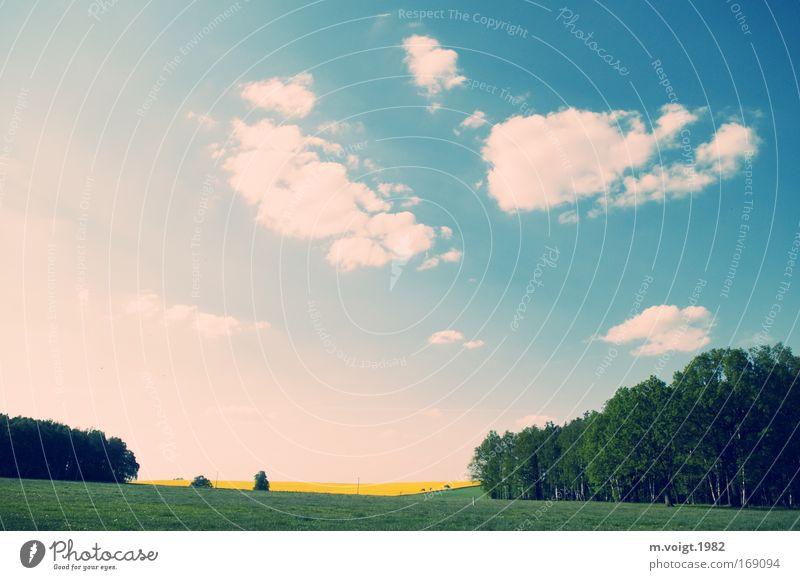Schön ist's daheim Farbfoto mehrfarbig Außenaufnahme Menschenleer Tag Natur Himmel Wolken Horizont Frühling Schönes Wetter Baum Gras Rapsfeld Wiese Feld Wald