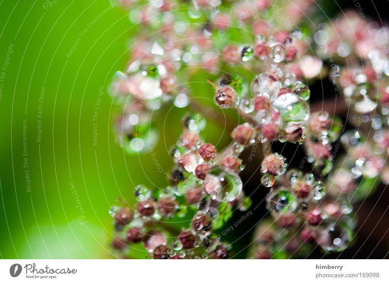 dropshop Natur Pflanze Sommer ruhig Erholung Stil Blüte Frühling Garten Park Regen Zufriedenheit Design Umwelt nass frisch
