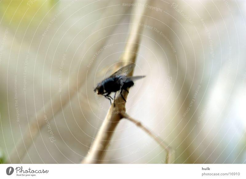 Fliege Insekt Ast Zweig