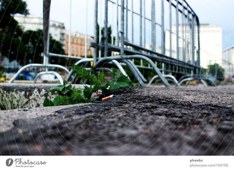 kavaliersdelikt? Straße Donau Donauinsel Musikfestival Barriere Feste & Feiern Fluss dreckig Hochhaus Zigarette zigarettenstummel Himmel Außenaufnahme
