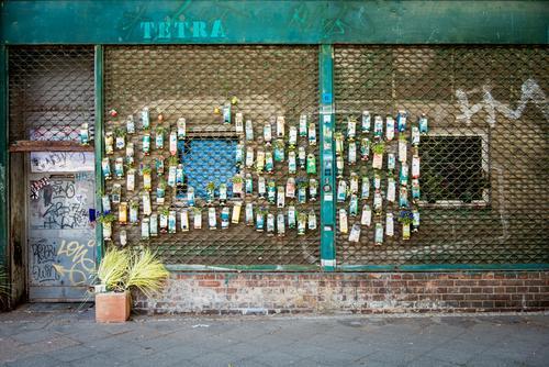 Urban Gardening I Stadt Pflanze Blume Wand Gras Berlin Mauer Gartenarbeit Topfpflanze improvisieren