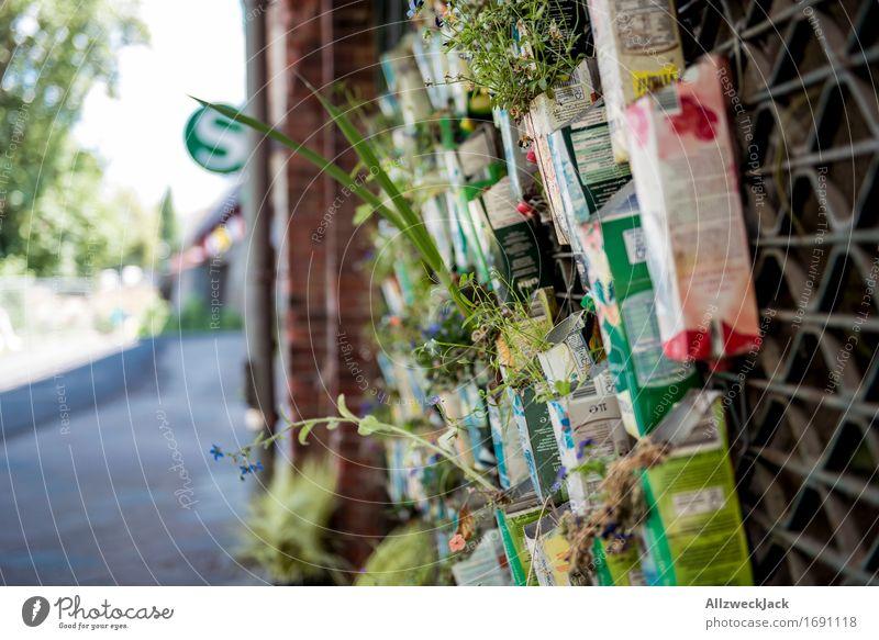 Urban Gardening II Natur Stadt Pflanze Blume Wand Berlin Mauer trendy Gartenarbeit Grünpflanze Topfpflanze improvisieren