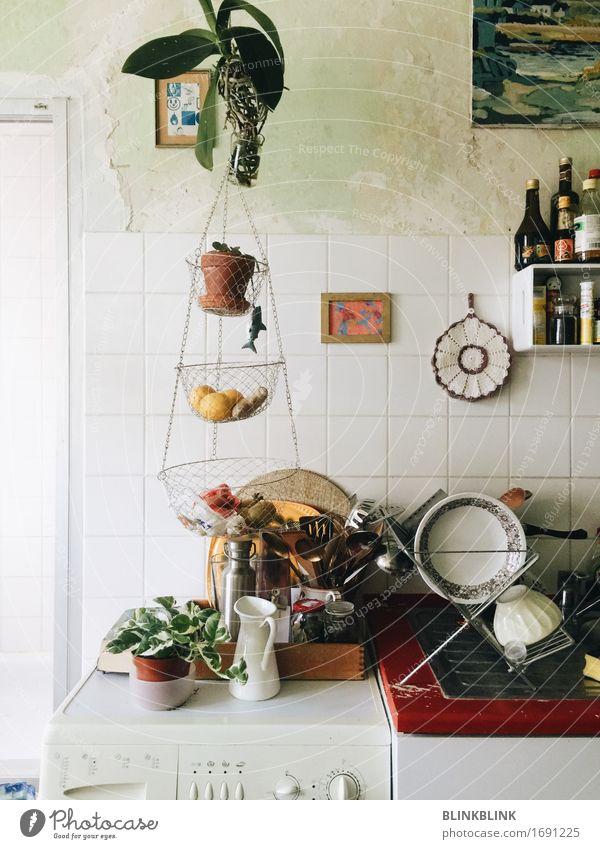 Pflanze grün Tier Wand Innenarchitektur Essen Lifestyle Stil Mauer Design Wohnung Häusliches Leben Dekoration & Verzierung ästhetisch authentisch Küche