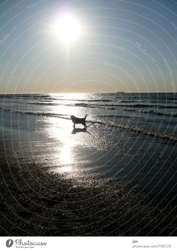 Ein schönes Hundeleben Himmel Natur blau Sonne Freude Strand Meer ruhig Einsamkeit Ferne Tier Leben Freiheit Glück Hund Horizont