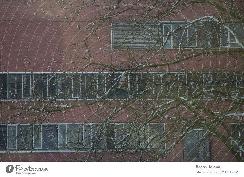Der Winter ist noch nicht vorbei Schnee Schneefall Park Stadt Haus Hochhaus Mauer Wand Fassade Fenster Stein Glas frieren Blick warten eckig rosa weiß Baum