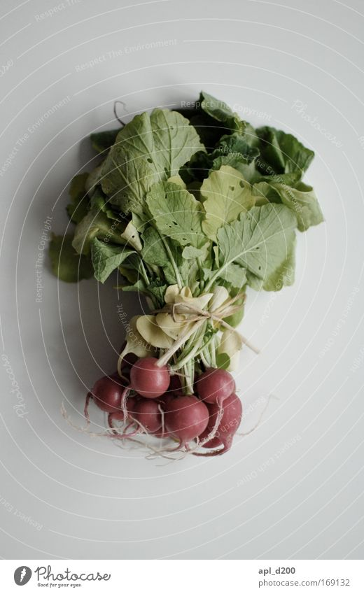 Radieschen von oben betrachten Natur grün rot Ernährung Gesundheit Lebensmittel Umwelt frisch ästhetisch liegen Gemüse Abendessen Mittagessen Bioprodukte Radieschen