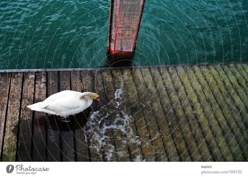 50_Badetag zur Feier des Tages Farbfoto Außenaufnahme Menschenleer Textfreiraum rechts Textfreiraum oben Vogelperspektive Umwelt Natur Tier Sommer Wellen Küste
